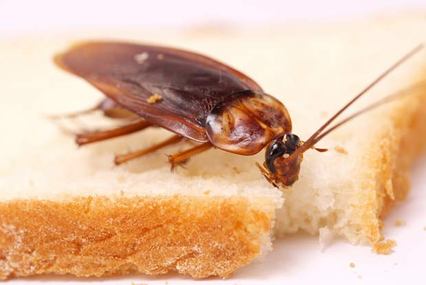 What Works For Bed Bugs