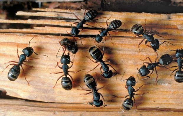 соник когда снятся муравьи стал пьяницей