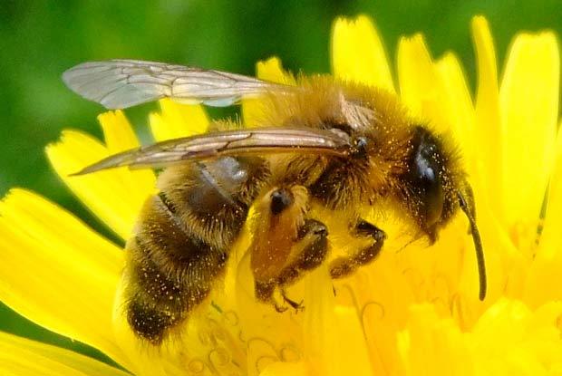 Honey Bees Portland Pest Guard
